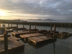 Fisherman's Wharf || Seals