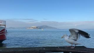 Fisherman's Wharf    View of Acatraz